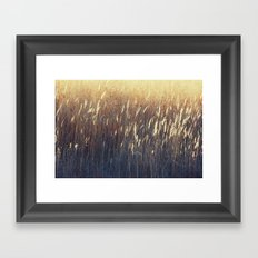 Amber Waves No. 2 Framed Art Print