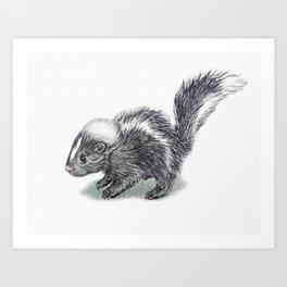 Baby Skunk Art Print
