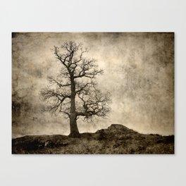 Tree At Park Brow Canvas Print