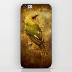 Avian Art iPhone & iPod Skin