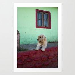 White Dog, Blue House Art Print