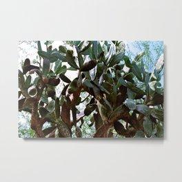 Big cactus Metal Print