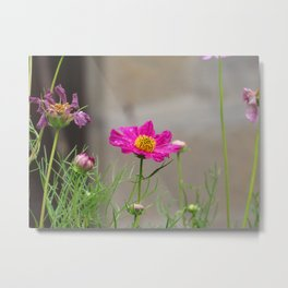 Fuchia wild flower Metal Print