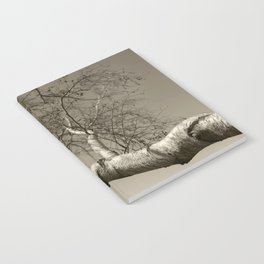 Birch tree #01 Notebook
