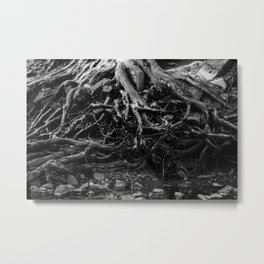 Black and White Tree Root Photography Print Metal Print