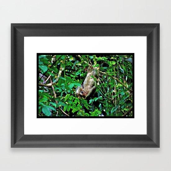 Three-Toed Sloth  Framed Art Print