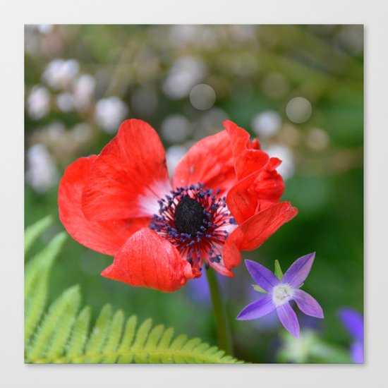 Vivid Red Anemone  Canvas Print
