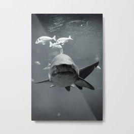Shark Intense Metal Print