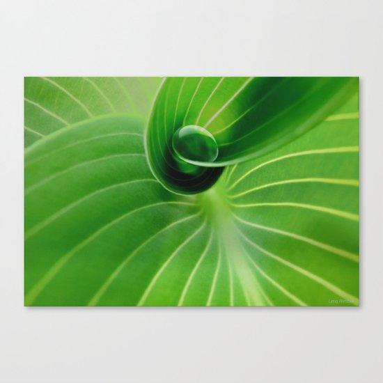 Leaf / Hosta with Drop (2) Canvas Print