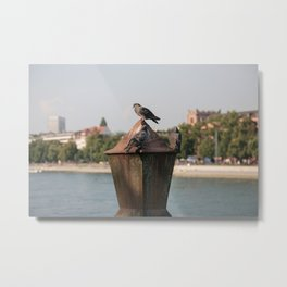 Doves in Basel Metal Print