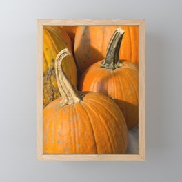 Line up of Orange Pumpkins Framed Mini Art Print