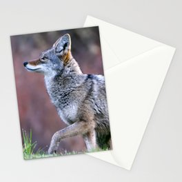 Wild coyote on the hunt Stationery Cards