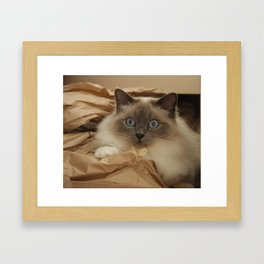 Cat in a Box Framed Art Print