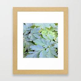 Dew Drops on Leaves Framed Art Print