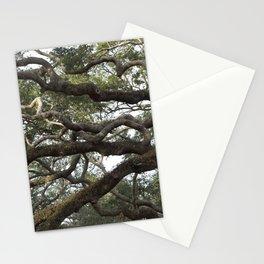 Live Oak Tree Stationery Cards