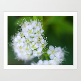 Bunches of White Art Print
