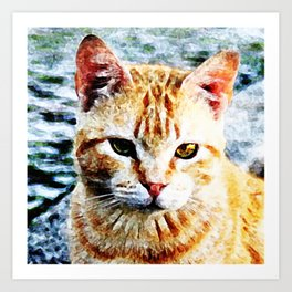 Young Yellow Cat Art Print