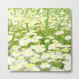Field of daisies Metal Print