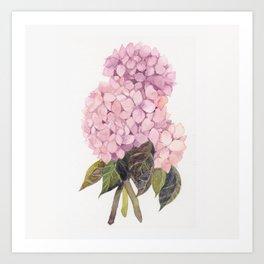 watercolor pink hydrangea Art Print