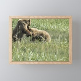Brown Bear Cubs - The Provocation Framed Mini Art Print