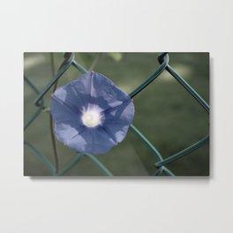 Purple Flower on the fence Metal Print