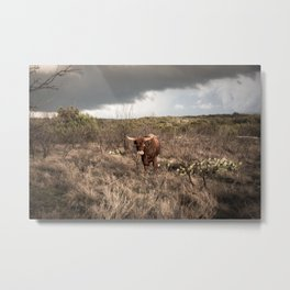 Stare Down - A Texas Bull in the Mesquite and Cactus Metal Print