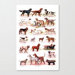 vintage dog breed chart  Canvas Print