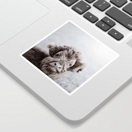HIGHLAND CATTLE CALF ALF Sticker