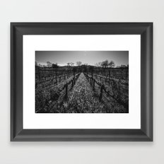 Napa Vines Framed Art Print