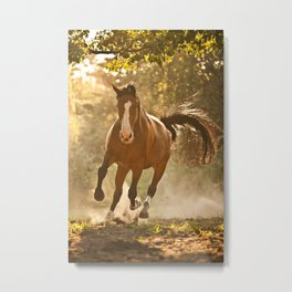 Horse in Sunset and Dust Metal Print