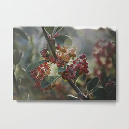 Soft Light on Winterberry Shrub Metal Print