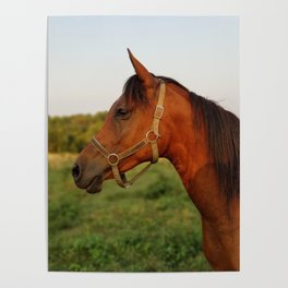 Stormy, our Arabian Poster