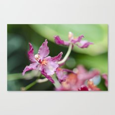 Orchid Beauty (3) Canvas Print