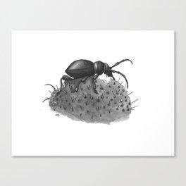 Inktobober 2016: Cactus Longhorn Beetle Canvas Print