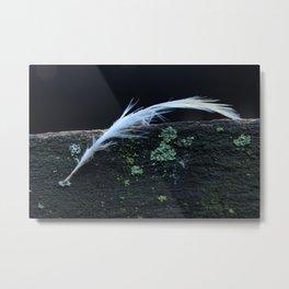 Feather Texture Metal Print