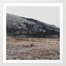 Silverton Fox Art Print