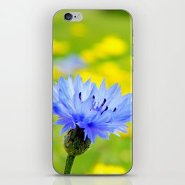 Bachelor's Buttons Flower iPhone Skin