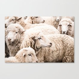 Wall to wall sheep Canvas Print