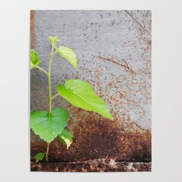 Fresh green with rusty grey Poster