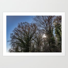 Beautiful day in a winter forest Art Print