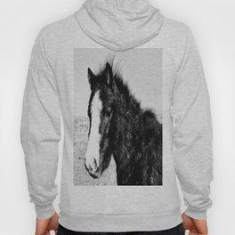 Mini Horse (2) Hoody