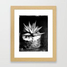 Haworthia Succulent Tintype Framed Art Print