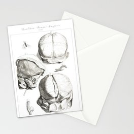 Human Anatomy Art Print HEAD BRAIN SKULL Vintage Anatomy, doctor medical art, Antique Book Plate, Me Stationery Cards
