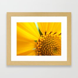 Up Close and Personal Framed Art Print