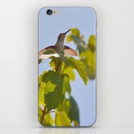 Hummingbird Chirping Away iPhone Skin