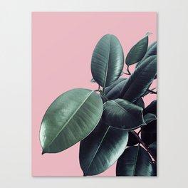 Ficus Elastica #14 #CoralBlush #decor #art #society6 Canvas Print