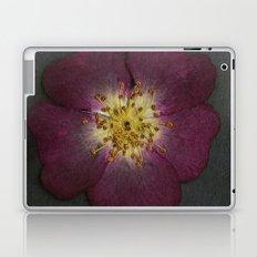 Pressed Wild Rose Laptop & iPad Skin