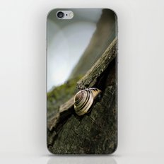 A Safe Place to Rest iPhone & iPod Skin
