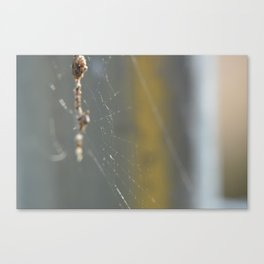 caught in the web Canvas Print