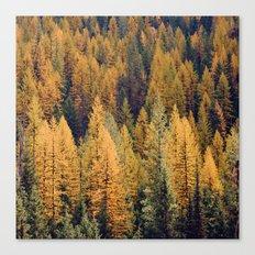 Autumn Tamarack Pine Trees Canvas Print